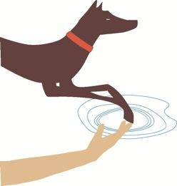 Canine Rehabilitation Institute | European Program | Course Information