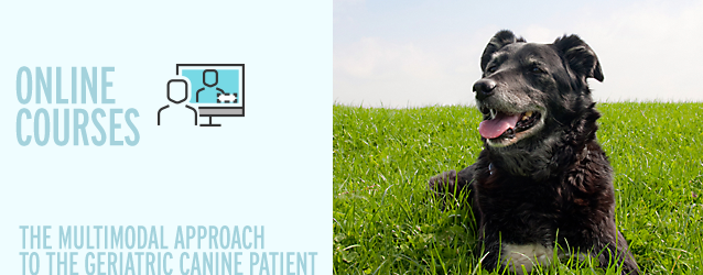The Multimodal Approach to the Geriatric Canine Patient Online Course