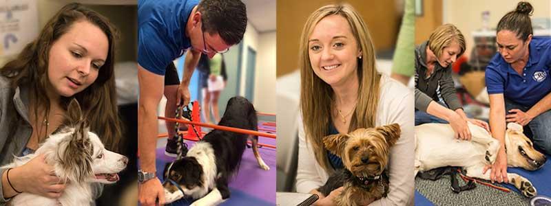 florida canine academy